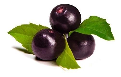 Maqui Berry Organico En Polvo X 60 Grs 850 00 En Mercado Libre