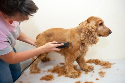 maquina eléctrica para mascotas cortadora razuradora oferta