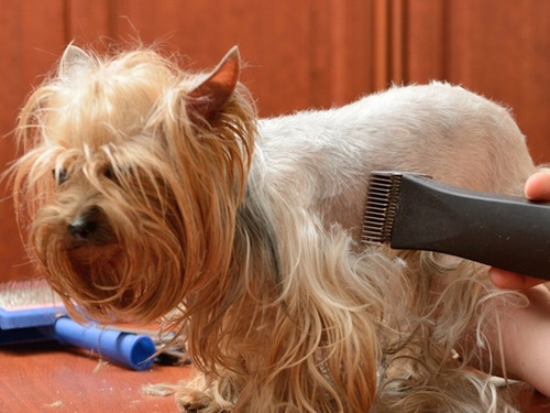 maquina para cortar pelo de perro htc