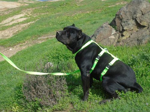 más perros - arnés anti escape talla m