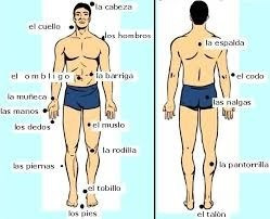 masajes masculinos profesionales y deportivos