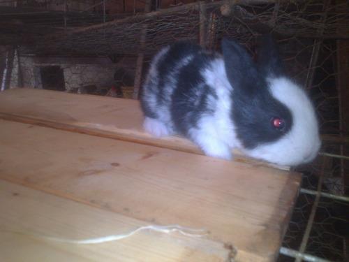 mascota conejo pdf manual