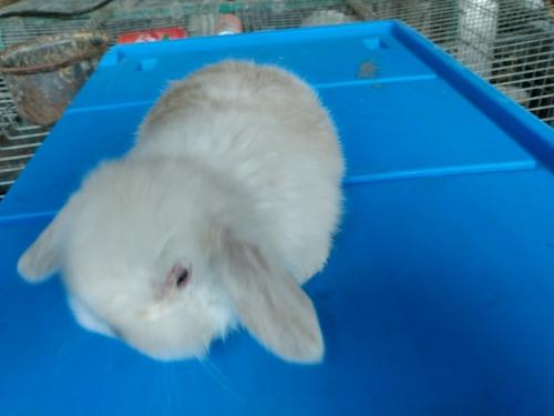 mascota mas conejos