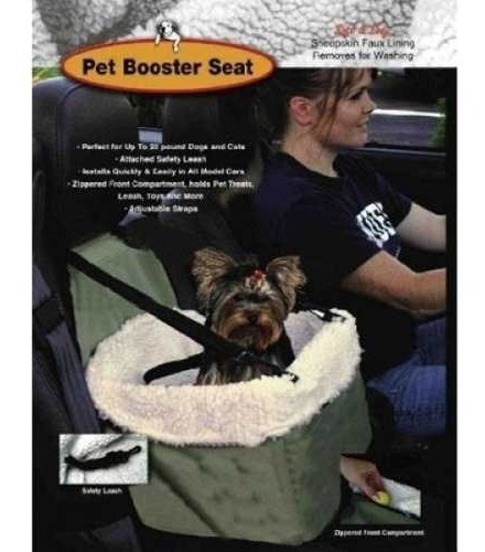 mascota viaje perro