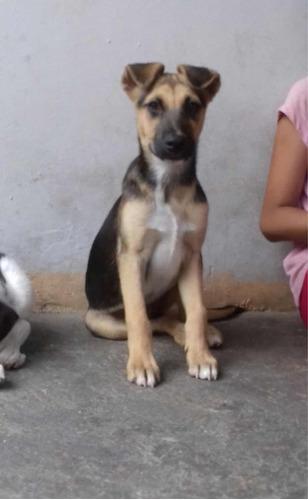 mascotas en adopción responsable(leer descripción)
