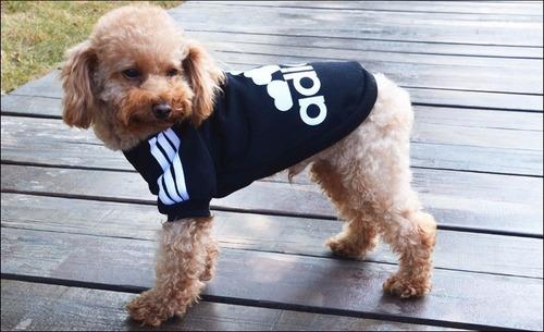 mascotas hermosa ropa perro adidog