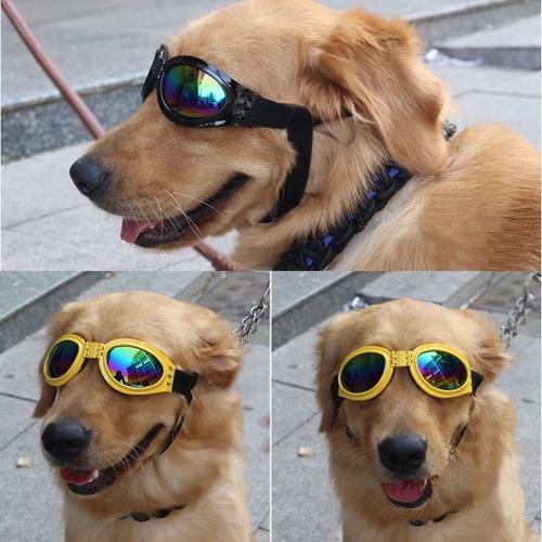 mascotas para perros