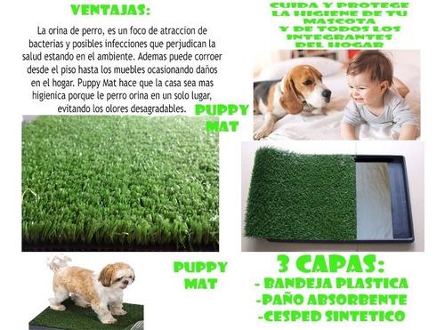 mascotas perro sanitaria