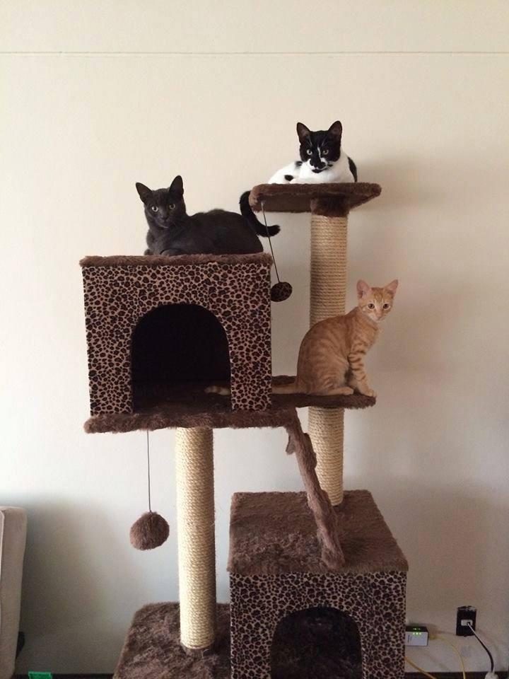 Mascotas rascador ara ador para gatos modelo dany s - Casas para gatos baratas ...