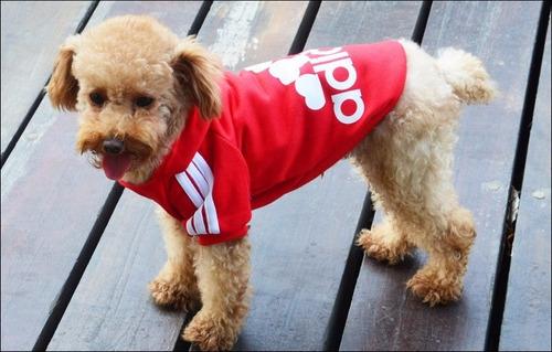 mascotas ropa perro