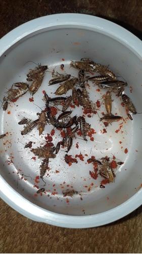 mata cucarachas y chiripas