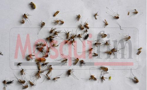 mata pernilongos mosquifim mf60 original armadilha. aedes