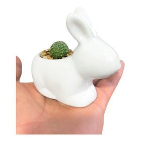 Matera Mini Animalitos Cerámica Con Cactus