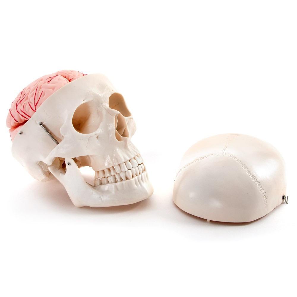 Encantador Modelo Del Cráneo Del Punto Fotos - Manta de Tejer Patrón ...