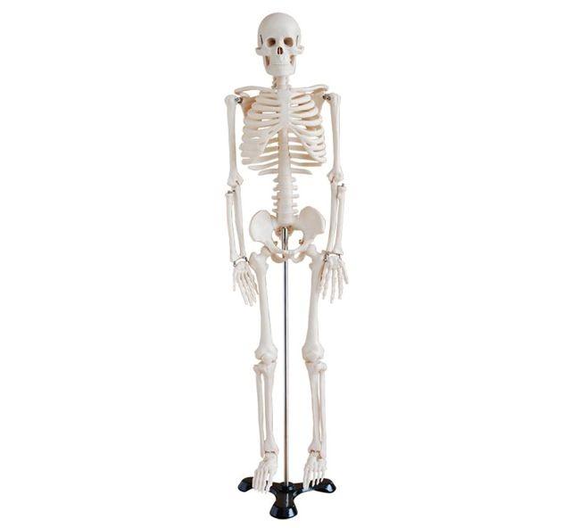 Material Didactico - Mini Esqueleto Humano Plástico - $ 2.090,00 en ...