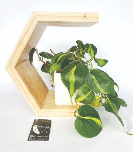 matero wood exagon natural con planta