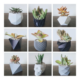 Materos Porrones Decorativo Modernos Para Suculentas Cactus
