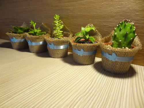matrimonios recuerdos cactus suculentas regalo fiestas