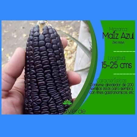 Mazorca de ma z azul en mercado libre for Como cocinar mazorcas de maiz