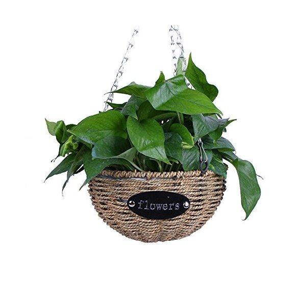 mecai colgantes de flores de plantas de interior al aire lib - Plantas Colgantes