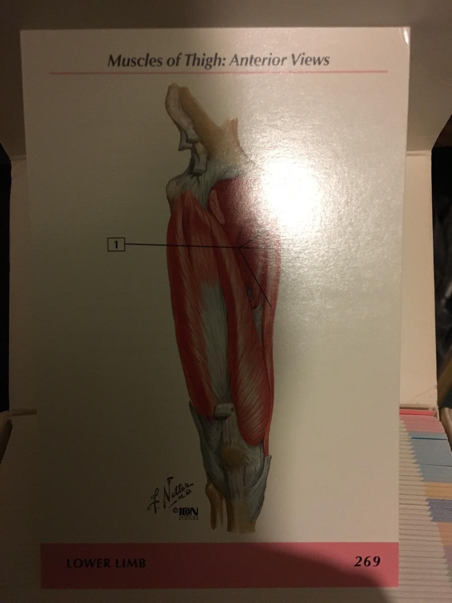 Lujo Estudio Rápido Tarjetas Flash De La Anatomía Inspiración ...