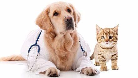 medico veterinario a domicilio y servicio de fumigación