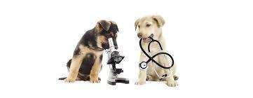 medico veterinario en tu casa