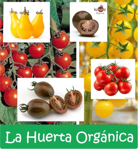 mega combo semillas! huerta exótica + aromáticas + cherrys raros!