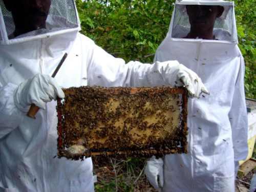 mel puro de abelha europa - embalagem 280 g - bico dosador