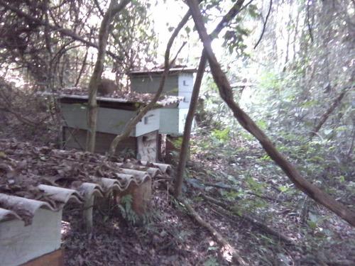 mel puro  floração silvestre ,2,9kg abelha ápis
