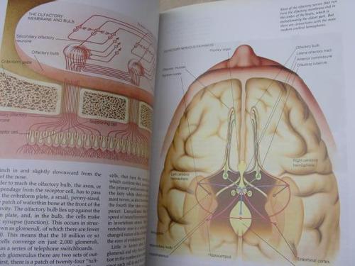 mercurio peruano: libro cuerpo humano oido gusto olfato l38