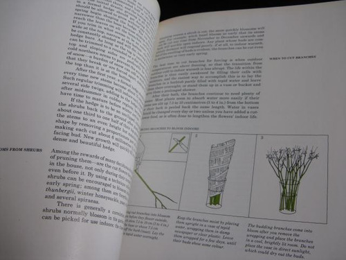 mercurio peruano: libro flores shurbs time life  l64