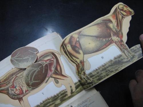 mercurio peruano: libro ganado lanar  1928 l63