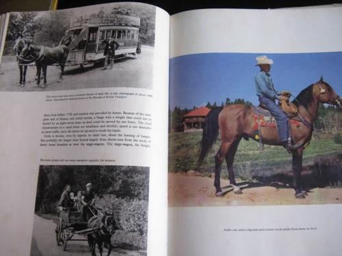 mercurio peruano: libro  historia evolucion caballos l83