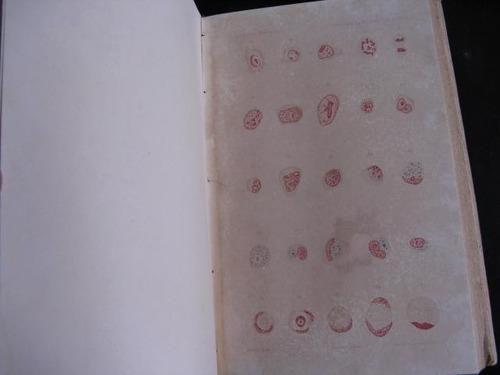 mercurio peruano: libro medicina cirugia del recto 1899 l73