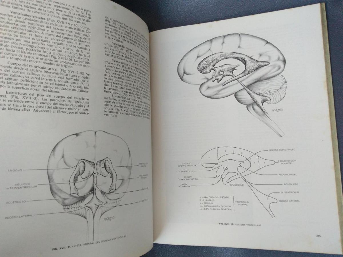 Perfecto Anatomía Compleja Osteomeatal Regalo - Anatomía de Las ...