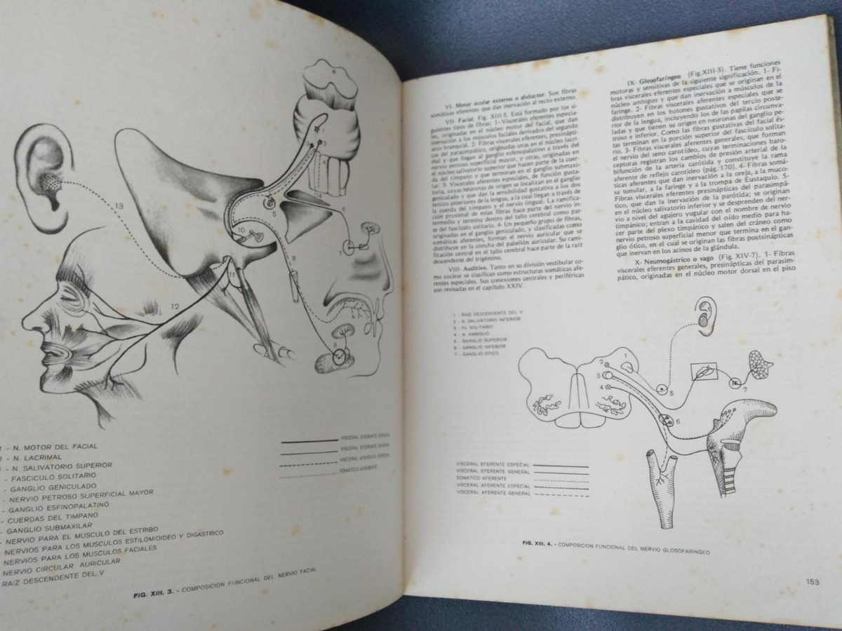 Mercurio Peruano: Libro Neuro Anatomia Funcional Medicina 97 - S ...