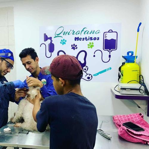 mestizos centro veterinario