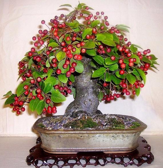 Resultado de imagem para como fazer bonsai de frutas