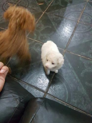 micro toy blanca