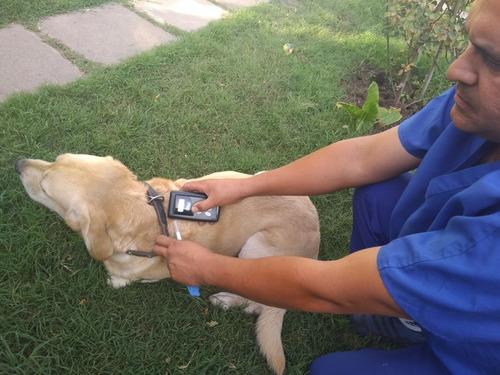 microchip identificación para mascotas