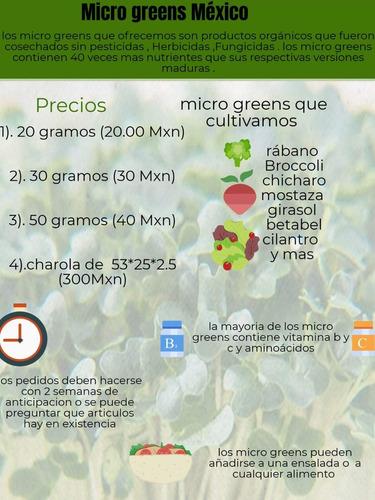 microgreens para alto restaurante o consumo personal