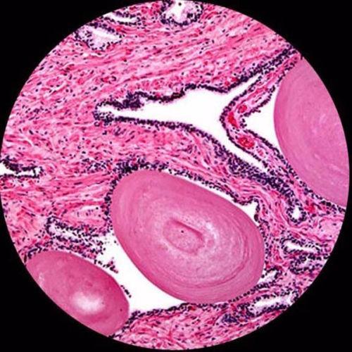 microscopio profesional compuesto binocular amscope 40-2500x