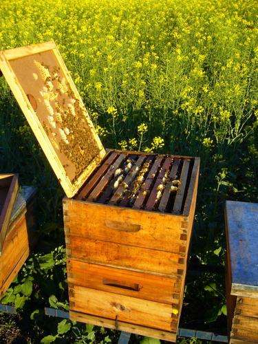 miel 100% pura granel. regional y artesanal. baldes x 10kg