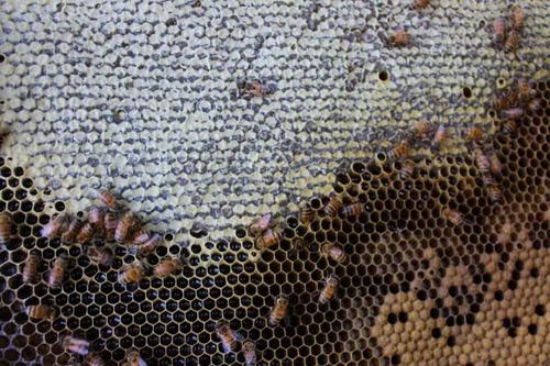miel de abeja 100% natural y orgánica