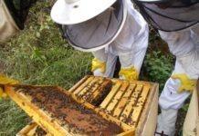 miel de abeja 100 %pura