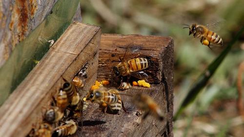 miel de abeja orgánica de cafetal. 100% pura. chiapas 1 kilo