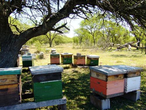miel multifloral 100% pura. regional y artesanal. x 500g
