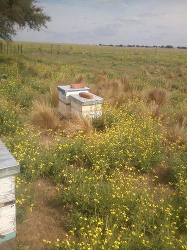 miel pura  100% natural  x 5 kg. en balde