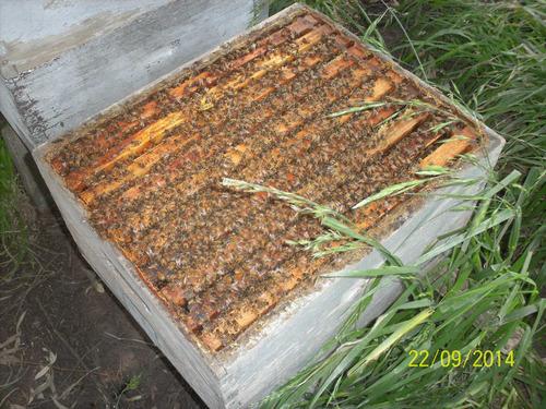 miel pura con manejo organico, de pradera zona centro bsas